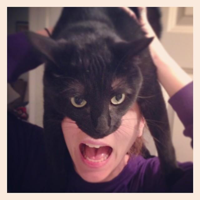 catman5