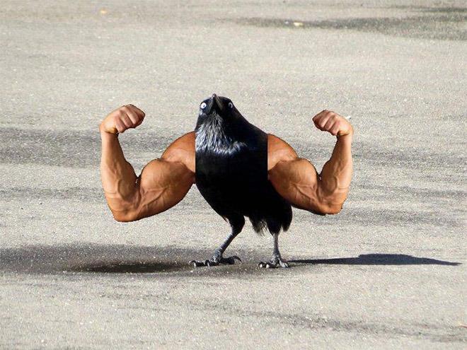 bird-with-arms1