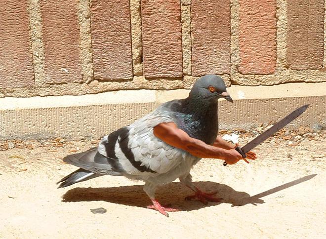 bird-with-arms11
