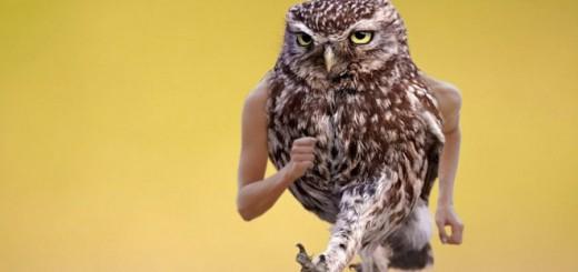 鳥にもしも腕が生えたらどうなる?写真まとめ