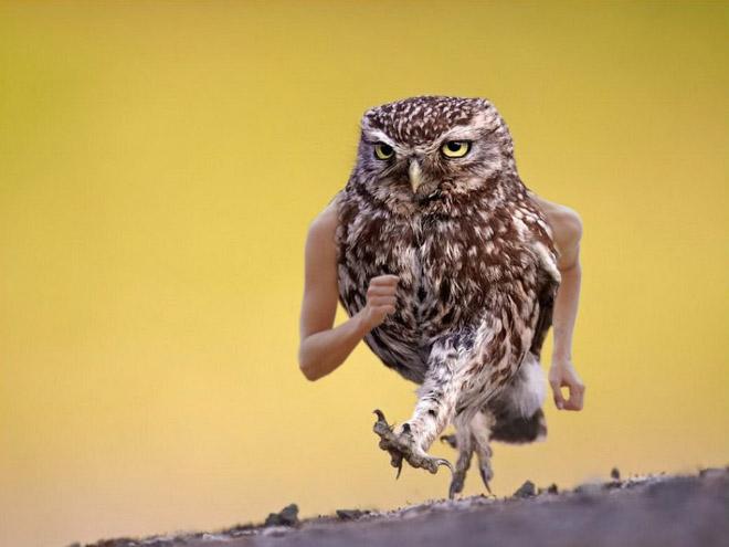 bird-with-arms2