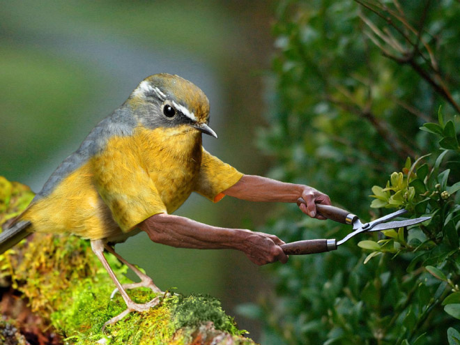 bird-with-arms4