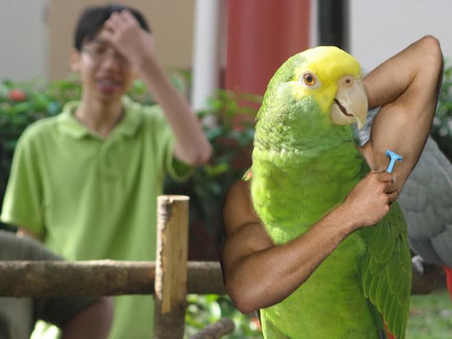 bird-with-arms6