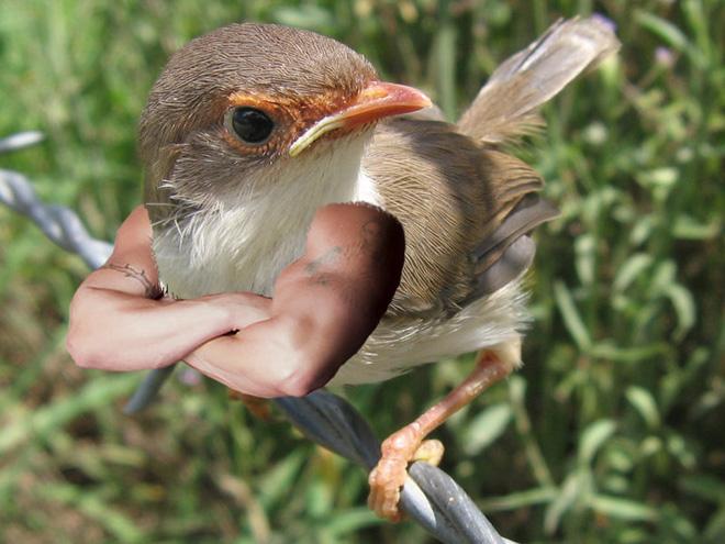 bird-with-arms8