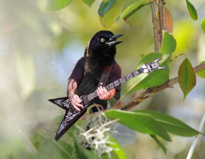 bird-with-arms9