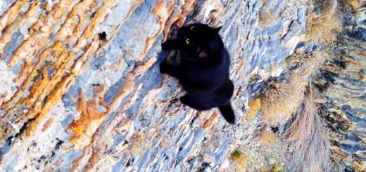 にゃんとも勇敢すぎ!ロッククライミングする猫