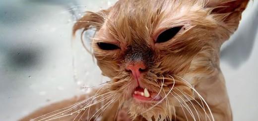 濡れた猫のデビル感は異常