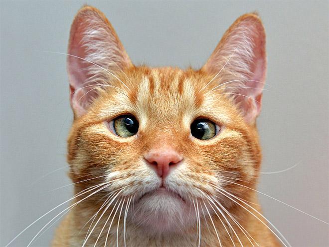 cross-eyed-cat1