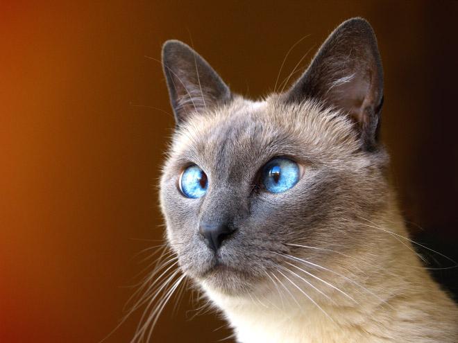 cross-eyed-cat14