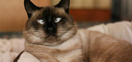 ちょwww寄り目のネコ可愛すぎwwwってことに気付く写真まとめ