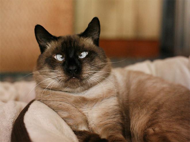 cross-eyed-cat16