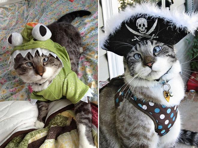cross-eyed-cat3