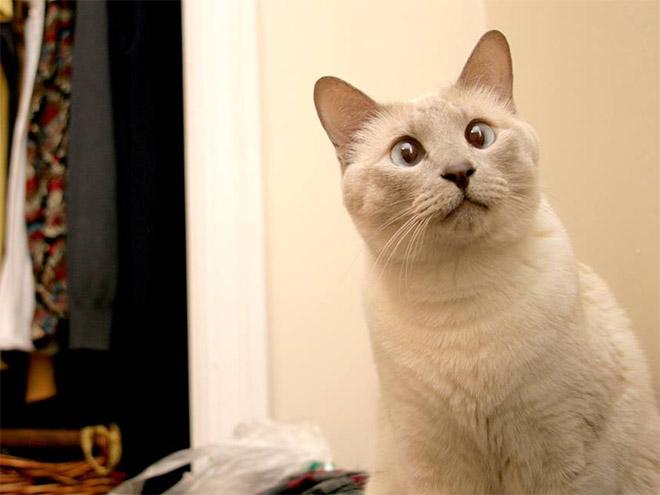 cross-eyed-cat5