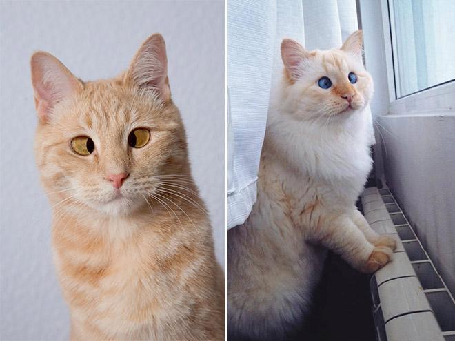cross-eyed-cat6