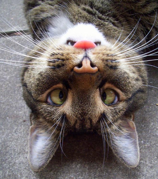 cross-eyed-cat7