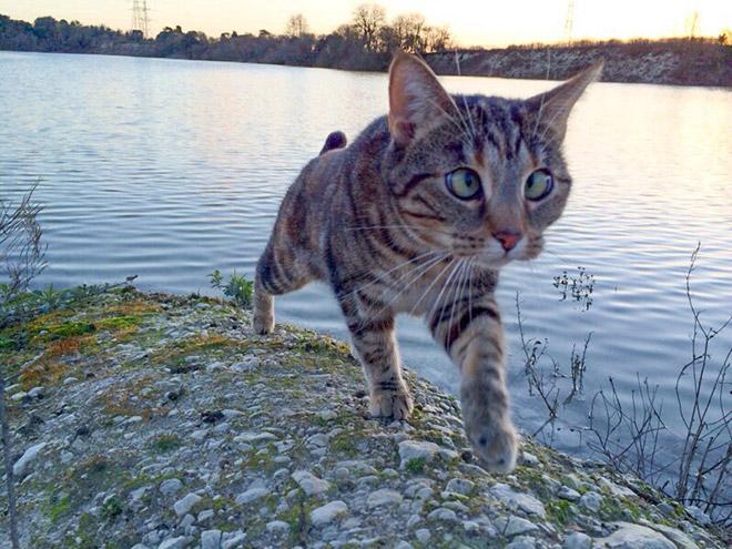 cross-eyed-cat8