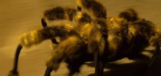 スパイダーワン参上! 突然巨大グモが現れる恐怖のドッキリ