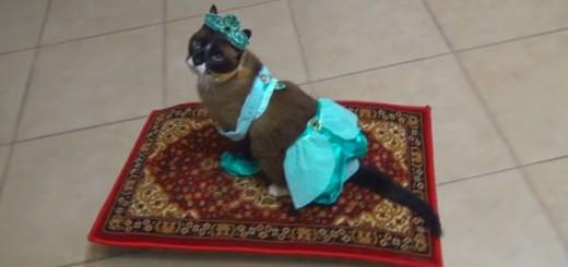「ルンバ猫」はもう古い!これから流行るのは、空飛ぶ絨毯に乗る「アラビアンキャット」