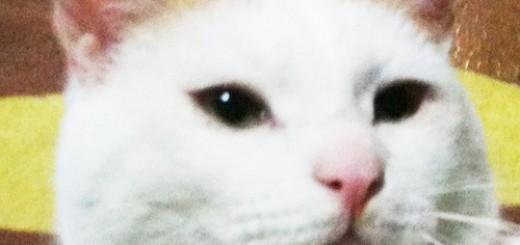 「人間とシェアハウスしています」意識高い系の猫が、シュールなつぶやきをTwitterで連発