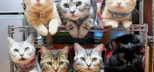 【猫も個室を持つ時代へ】自宅で建てる「猫マンション」が猫たちに大人気