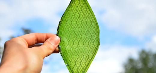 まさに大発明!光合成から酸素供給が可能な人工の葉っぱ「バイオリーフ」