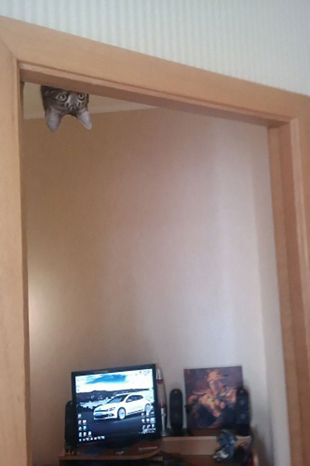 ninja-cat-hiding-funny-104__605
