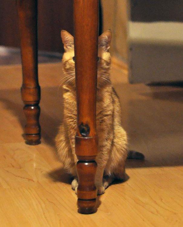 ninja-cat-hiding-funny-108__605