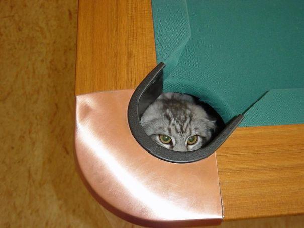 ninja-cat-hiding-funny-17__605