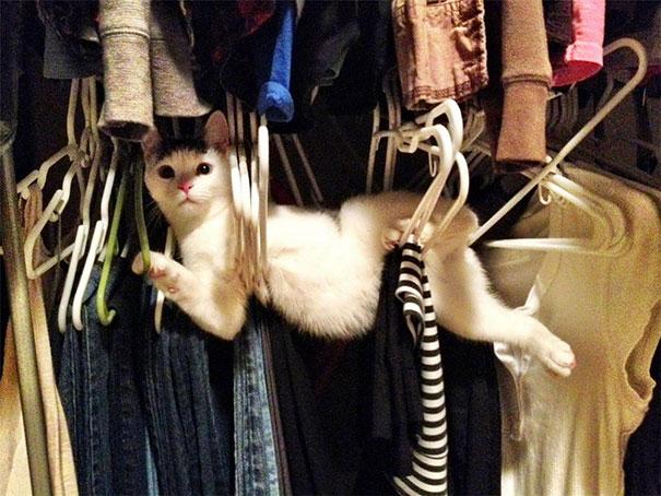 ninja-cat-hiding-funny-2__605