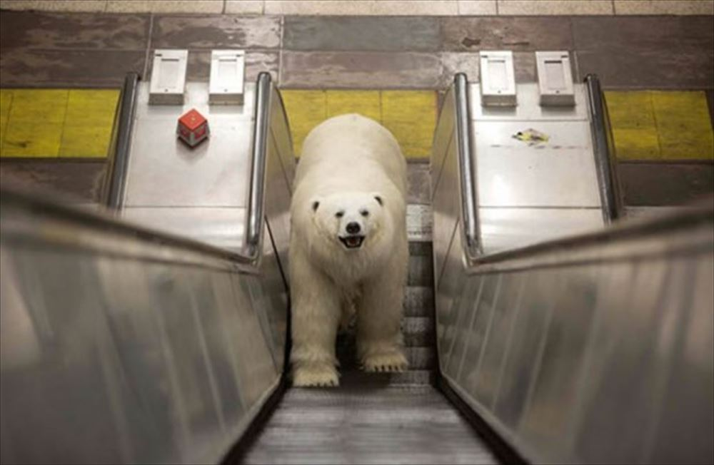 polar bear escalators_R