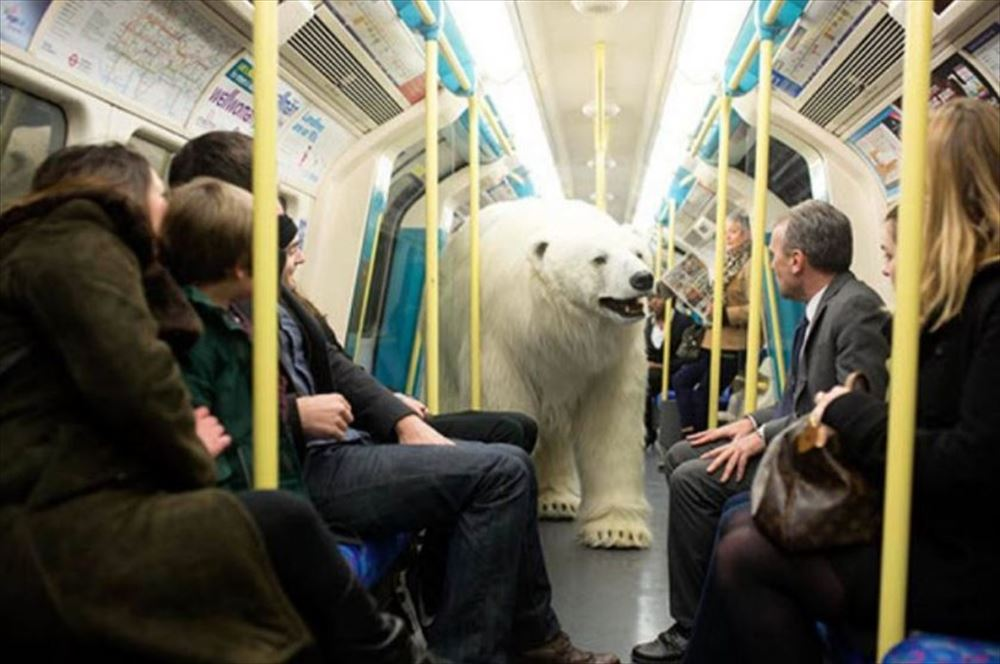polar bear inside tube_R