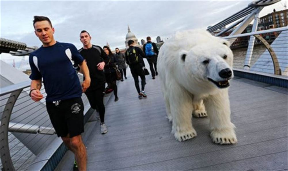 polar bear runners_0_R