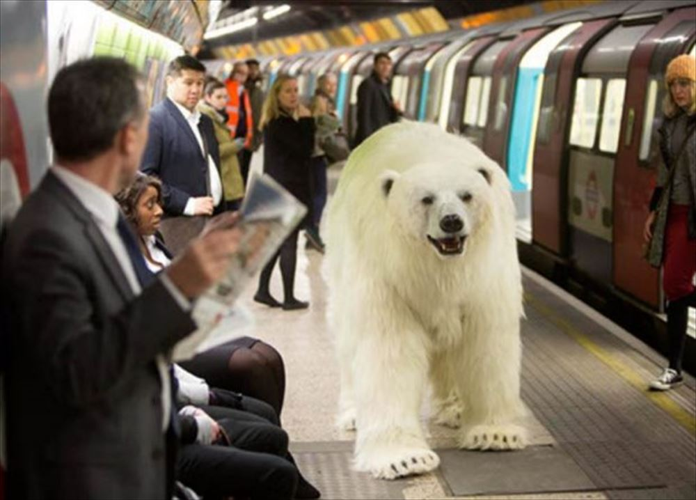 polar bear tube_R