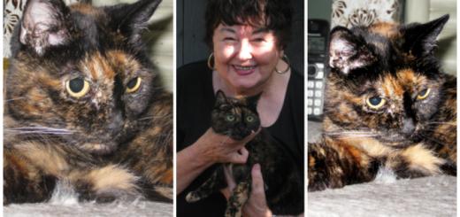 もはや猫又!?ギネス、世界最長寿のネコを認定
