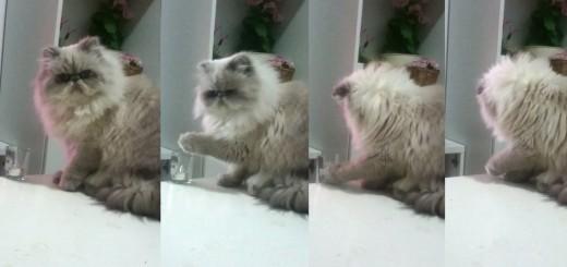 拗ねた猫、飼い主からの注意後にとった行動が憎たらしくて可愛い