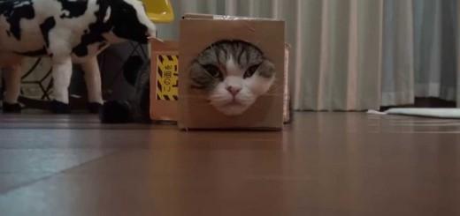 猫「やった!段ボールだ!」→顔を突っ込む→猫「か、顔が抜けん・・・」