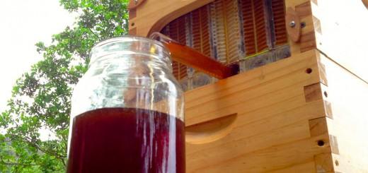 自動でハチミツが垂れてくる!安全に採取し放題の超便利な養蜂箱が、まさに世紀の大発明