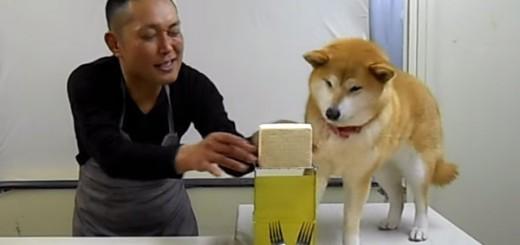 柴犬が邪魔して料理できない…腹筋崩壊必至のクッキングコント