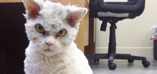 「おい、こっち見んな…」どの写真でもガン飛ばしまくりの、激おこ猫が可愛いと話題