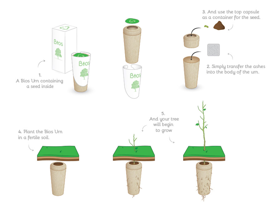 bios-urn-tree-after-life-biodegradable-3