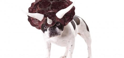 愛犬がトリケラトプスに進化!勇ましいのにほっこりする頭飾り