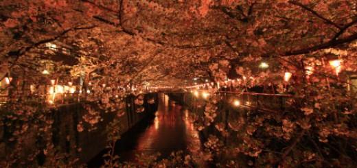 「エア花見」が急速に流行中!日本の花見カルチャーに激震