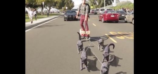 まさかのネコぞり誕生!?ネコたちが主人の乗るカートを引っ張る動画