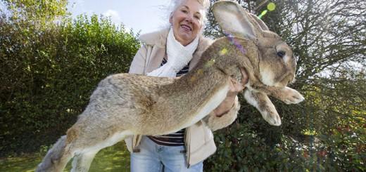 これが世界最大のウサギか…そのサイズ感がもはや大型犬