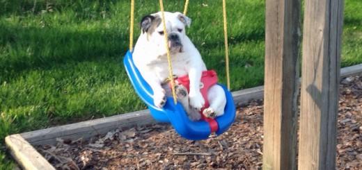 幼児用ブランコに乗せられ、どや顔を決め込む犬写真26選
