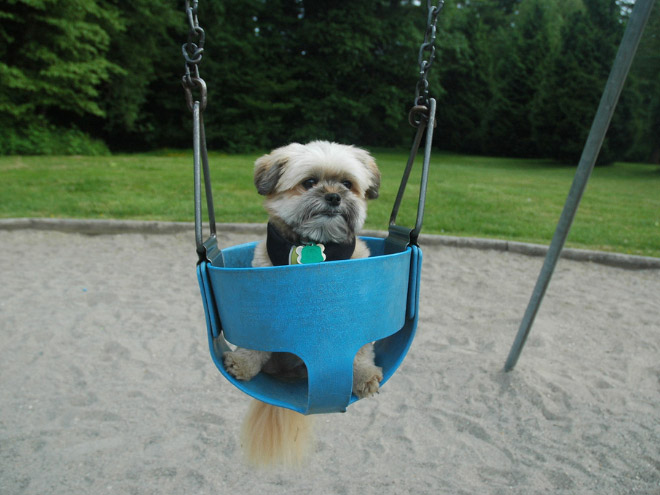 swings13