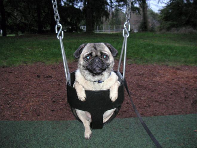 swings5