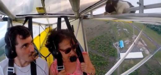 飛行機の翼からネコがひょっこり登場!離陸後のハプニング動画