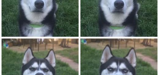 ボールを投げるフリして、投げてもらえなかった愛犬の表情ww