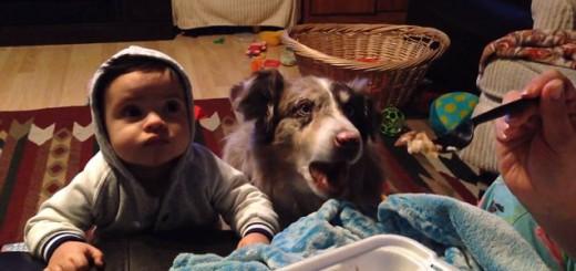 【衝撃映像】赤ちゃんのご飯を食べたい犬、「ママ…」と喋りだす